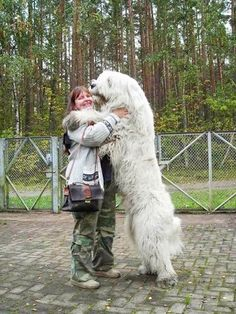 Komondor Dog  are you kidding me?!