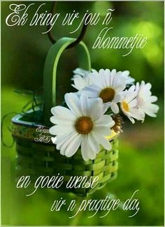 lovely little daisy basket Daisy Love, Daisy Daisy, Daisy Flowers, Cut Flowers, White Flowers, Good Morning Quotes, Morning Images, Ikebana, Have A Great Day