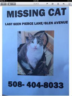 Found Cat: Happily Reunited! Found Cat, Lost & Found, Cats, Animals, Gatos, Animales, Animaux, Animal, Cat