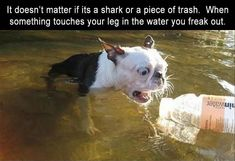 Funny Animal Pictures Of The Day - 23 Pics #dogsfunnyfaces