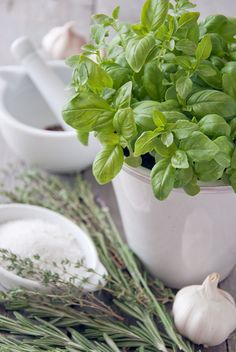 Big Leaf Green Basil Seed Organic Vegetable 100 Seeds/Pack (Luo Le) Seed for sale online Spices And Herbs, Fresh Herbs, Fresh Basil, Aromatic Herbs, Growing Herbs, Organic Vegetables, Herb Garden, Herbal Remedies, Food Pictures