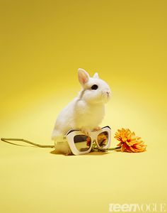 #BunniesinSunnies: 12 Insanely Cute Pics of Rabbits with Sunglasses, Because Why Not?