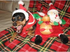 8 Ways to Help Your Dog Survive Holiday Visits.