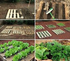 Plantar, Green Life, Vegetable Garden, Stepping Stones, Life Hacks, Around The Worlds, Outdoor Structures, Photo And Video, Landscape
