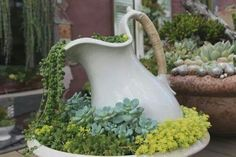 Plant fountain...looks awesome!