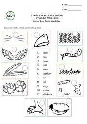 English Teaching Worksheets Animal Body Parts
