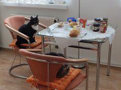 Lucky.. mach schon Lisa... von -Sabine- // laß uns das Frühstück der Dosies schon mal kosten, die merken das bestimmt nicht ! AM von mir: wir werden uns wohl noch zwei Stühle kaufen müssen,daß wir auch am Tisch Platz haben,denn Lisa u. Lucky sind immer die ersten am Tisch