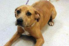 Mignon: Sweet mixed breed needs shares and pledges to save her life