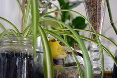 TERRAROOM | Les p'tits coins nature: atelier / Sur pause -> atelier, prêle, végétal, succulentes, greenlife, TERRAROOM atelier, into the wild, into the home, home, décoration, succulove, collection de plantes, centre de table, TERRAROOM studio, plantes addict, zen, la vie est belle, collection de trésors, urban jungle, namaste, Chlorophytum comosum, flower power, workplace, noix de coco, bulles de verdure, paix et tranquilité, le pouvoir des fleurs, création de terrariums, totem, caféier