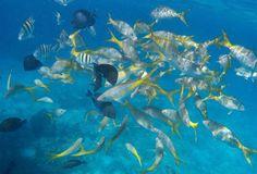 Best Nassau Snorkel Bahamas Adventure - Nassau   Viator