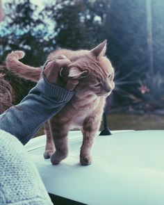 Sunday's are for snuggles. ✨ Illustrators On Instagram, Snuggles, Cats, Illustration, Sunday, Animals, Design, Gatos, Domingo