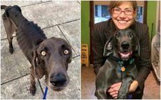 more amazing recovery of #rescue #dogs here >>  http://www.cribeo.com/estilo_de_vida/6963/camino-a-la-felicidad-este-es-el-antes-y-el-despues-de-20-animales-adoptados