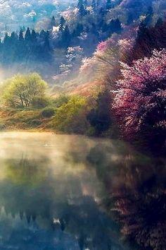Le printemps...enfin. Il a sorti ses douces couleurs pour faire comprendre à la forêt qu'il est bien installé pour rester:(Corée, photo de Jaew Expression)