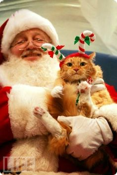 pere_noel_chat_012