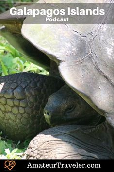 Travel to the Galapagos Islands (Podcast)   Cruise the Galapagos Islands #travel #ecuador #gapaagos #travel #trip #vacation #wildlife #cruise Galapagos Islands Ecuador, Ancient Ruins, South America Travel, Cruise Travel, Small Boats, Machu Picchu, Where To Go, Trip Planning, Beautiful Places