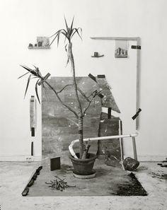 ORGANICA magazine | nature as a lifestyle