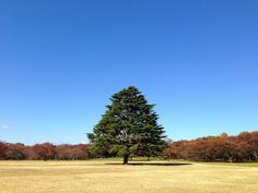 Far Tree #flickr #photo #iphoneography #japan