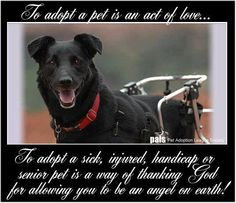 To adopt a pet is an act of love. To adopt a sick, handicapped or senior pet is a way of thanking God for allowing you to be an angel on earth!