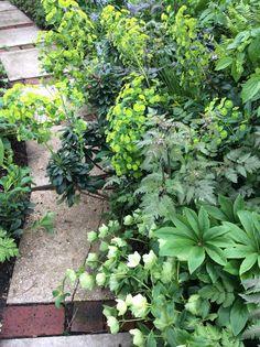 Mixed shady planting