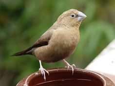 1000 images about vogels on pinterest wales aurora and opaline
