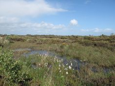 Great Bog Walks In The Irish Midlands Athlone - Clonown and Carrickynaghtan Bog (Natural Heritage Area), Ireland (map) There are some great bog walks all around the Irish midlands. Saint Patricks, St Patricks Day, Ireland Map, Walks, Irish, Travel, Hiking, Trips, Irish Language