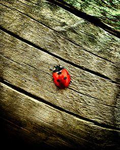 Always ladybugs.