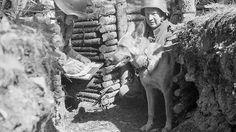 Sotakoirien rohkeus, taistelutahto ja kovuus auttoivat monissa ratkaisevissa paikoissa. Asiantuntijan mukaan sotakoirat pystyivät tekemään melkoisia sankaritekoja.  -- The courage, fighting morale and toughness on MWD´s helped the war effort in many crucial situations. MWD´s performed heroicly.