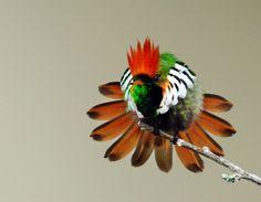 Beija-flores pelas Américas: As 5 fotos mais visualizadas de Beija-flores do WIKIAVES