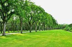 Kết quả hình ảnh cho park trees