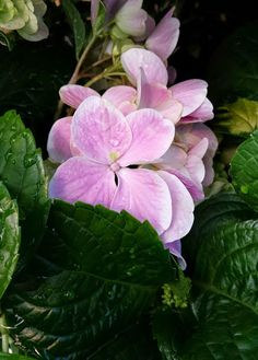 For a garden of enduring color, you can't miss when you plant hydrangeas. Look for pinks, reds, blues and purples in The Home Depot Garden Center, and click through to read more about growing these rewarding perennial shrubs.
