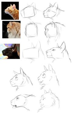 The Simple Guide to Drawing Realistic Cat Eyes Drawing Tips cat drawing Cat Reference, Art Reference Poses, Design Reference, Face Drawing Reference, Drawing Techniques, Drawing Tips, Drawing Drawing, Ideas For Drawing, Drawing Poses