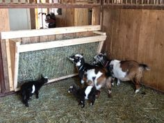 Goat Hay Feeder by Serendipity Wendy - just a picture, but the design seems pretty simple. Goat Hay Feeder, Diy Hay Feeder, Goat Playground, Goat Shed, Goat Shelter, Animal Shelter, Goat Care, Nigerian Dwarf Goats, Raising Goats