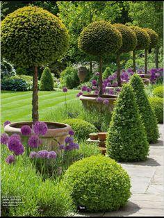 Boarder design box ball, olive & lavender Boxwood Garden, Topiary Garden, Topiary Trees, Formal Garden Design, Small Garden Design, Small Front Yard Landscaping, Garden Landscaping, Farm Gardens, Small Gardens