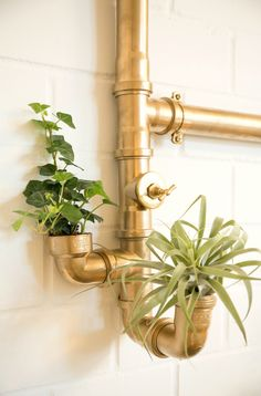 Pflanzenwand Selber Machen pipe plant wall diy plants pipes walls and apartments