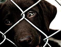 wszystko o psach: Ochrona zwierząt