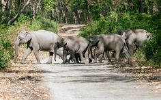 Endangered Elephants in India Have a Surprising New Threat. Speeding trains!  Did you now that one elephant is killed every 15 minutes by poachers!!