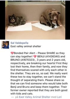 ❤️❤️ RESCUED TOGETHER❤️❤️ 12/2/16 PLEASE SHARE BENJI AND BRUNO!! THIS IS TOTALLY HEARTBREAKING!! CALIFORNIA!! /ij https://m.facebook.com/photo.php?fbid=10154738759168627&set=a.10150310077708627.389205.773788626&type=3&theater