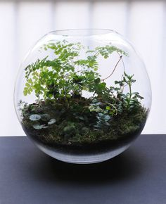 a Paris-based artist and photographer started making terrariums to satisfy her green thumb back in 2010. Grow Little (also based in Paris) is her company where she makes some pretty special terrariums.  Made in extra large hand blown glass vessels of various sizes, each is a piece of art and an original; with a unique miniature landscape desig
