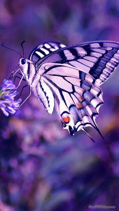 Schmetterling Mariposa Farfalla