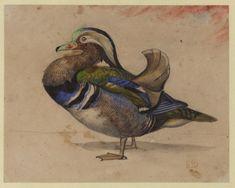 A Mandarin drake by  Eugene Delacroix