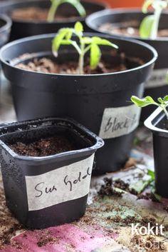 Tomaatin kasvatus - siementen kylvö | Kokit ja Potit -ruokablogi Garden, Plants, Kitchen, Healthy, Garten, Cooking, Gardens, Planters, Kitchens