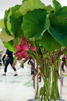 Lotus and pokeweed