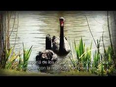 [IDDSMM]- Cristo Ahnsahnghong - YouTube