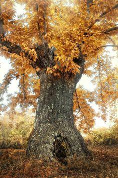 Harvest Season, Harvest Time, Silvan Elves, Orange Season, Landscape Photography, Art Photography, Bare Tree, Mabon, Pot Of Gold
