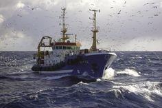 Noordzee | Marine Stewardship Council | Nederlandse haringvissers van de Pelagic Freezer-Trawler Association | www.msc.org/nl |