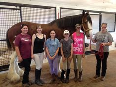 2014 ABC Classic City Clydesdales.