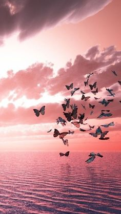 Pensieri sulla libertà Swarm of butterflies flying towards the pink sunset.Swarm of butterflies flying towards the pink sunset. Butterflies Flying, Beautiful Butterflies, Roses Tumblr, Pink Sunset, Sunset Sea, Butterfly Wallpaper, Pink Aesthetic, Belle Photo, Watercolor Flowers