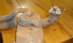 Gato fica entalado em peça de motor de carro... Que cara esquisita! http://www.em.com.br/app/noticia/nacional/2012/05/30/interna_nacional,297278/gato-fica-entalado-em-peca-de-motor-de-carro-e-e-resgatado-por-bombeiros-em-go.shtml