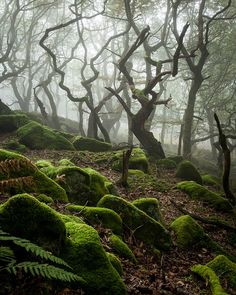 Dark Wood, Peak District National Park, England, UK.  Mysterious.