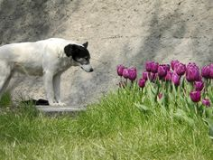 Protect Your Pets From Harmful Plants : Outdoors : Home & Garden Television